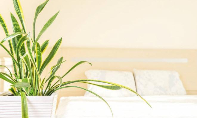 orhp-6-18-18-houseplants